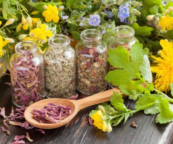 Phytotherapie-les-plantes-n-ont-pas-toutes-la-meme-qualite_width1024